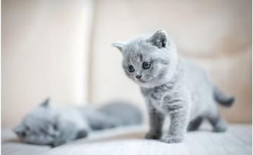 Yavru Kedi Nasıl Beslenir?