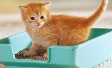 Kedi Kumu Ne İşe Yarar?